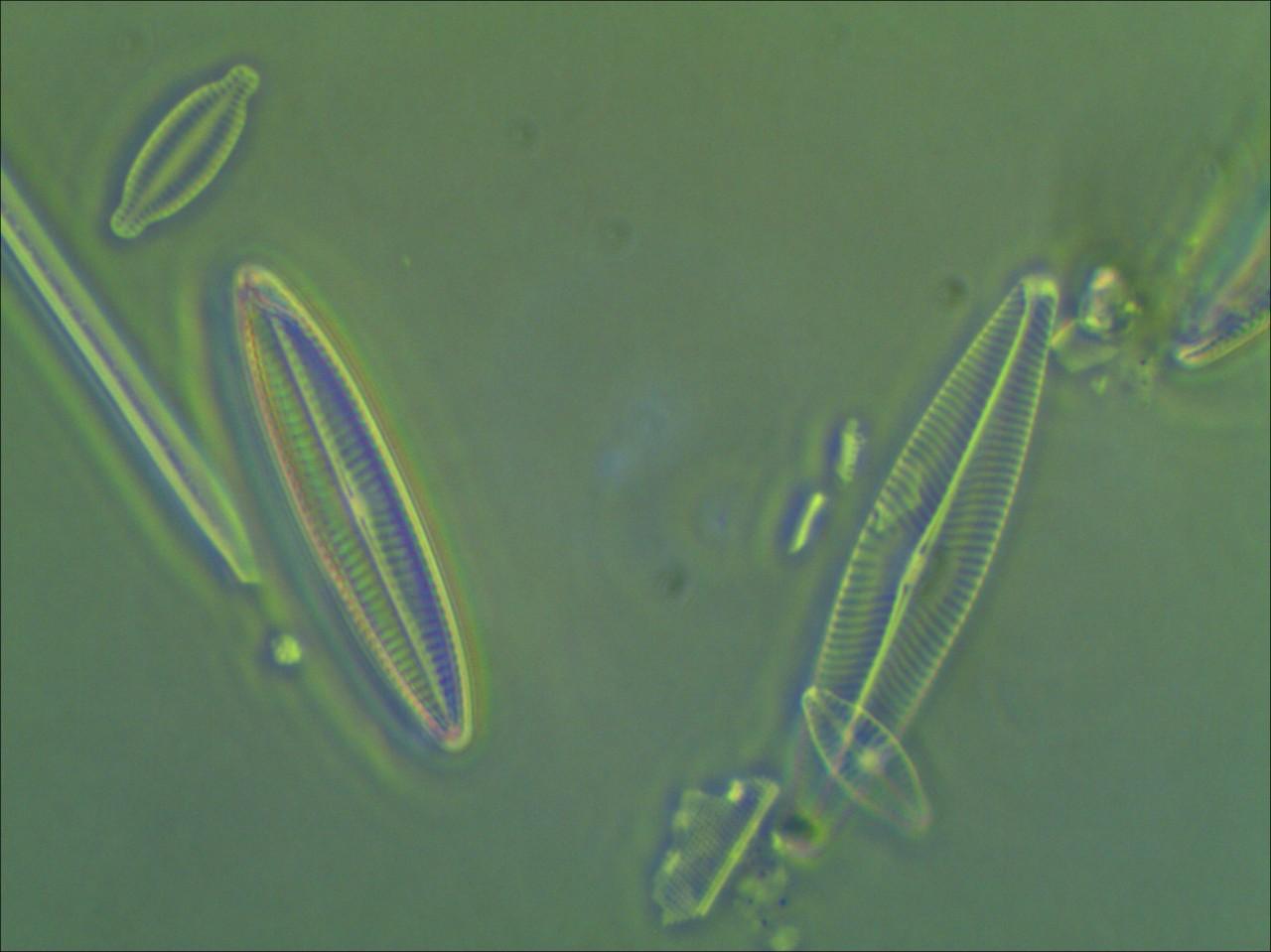Diatomées Yvette.jpg