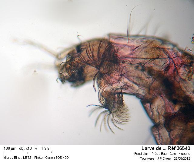 larve_de__ref_36540.jpg