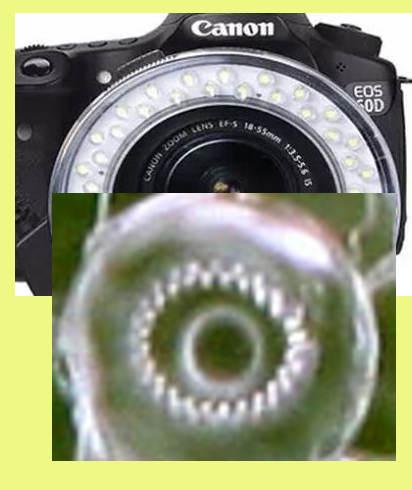 Flash3.jpg