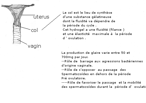 glaire texte 1.jpg