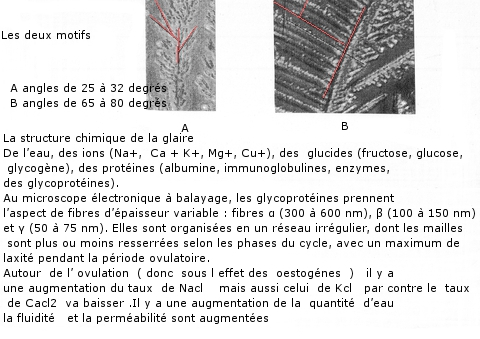 glaire texte 10 2.jpg