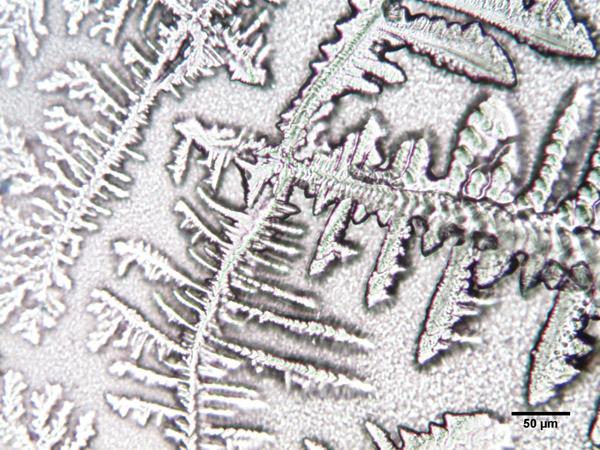 Liquide pré-éjaculatoire x250.jpg
