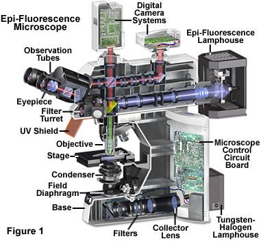 fluorointrofigure1.jpg