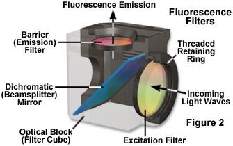 fluorointrofigure2.jpg