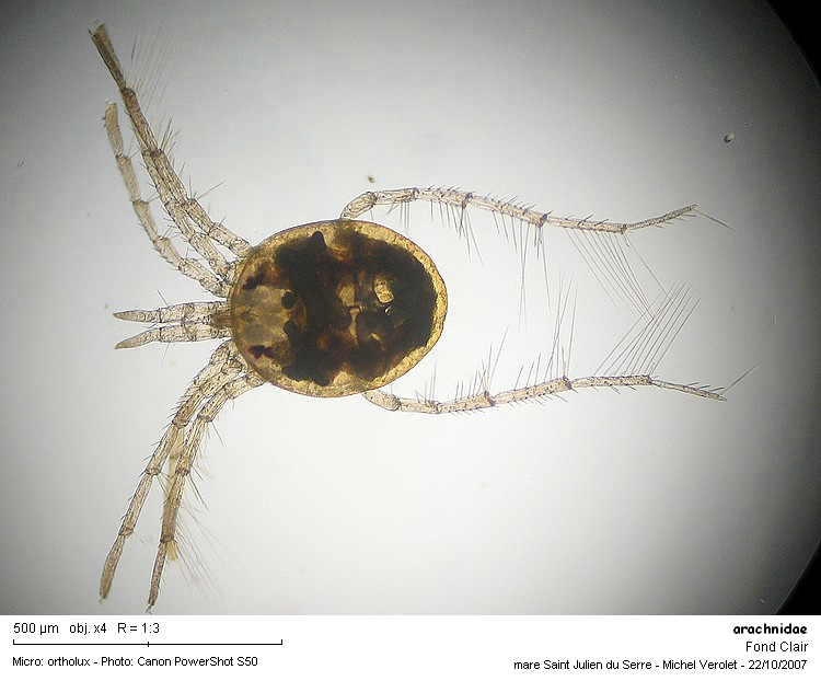 arachnidae.jpg