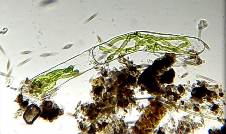 algue10-10-11.jpg