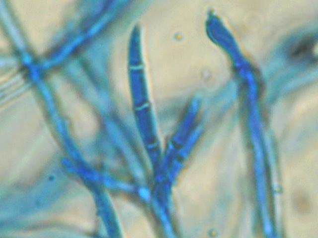 mycologie du debutant 5.jpg