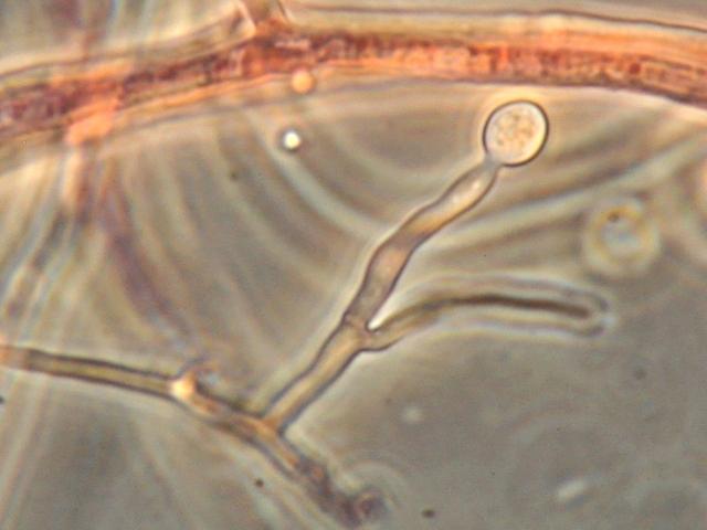 mycologie du debutant  6.jpg