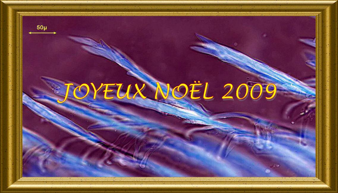 JN2009_OR2.jpg
