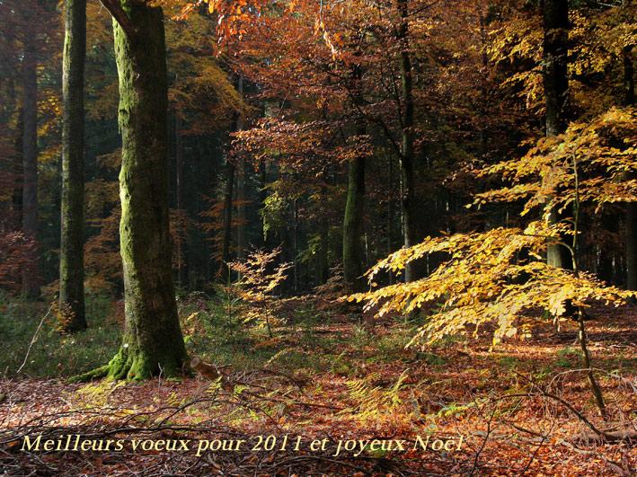 IMG_2739_voeux_2011web_réduit_256.jpg
