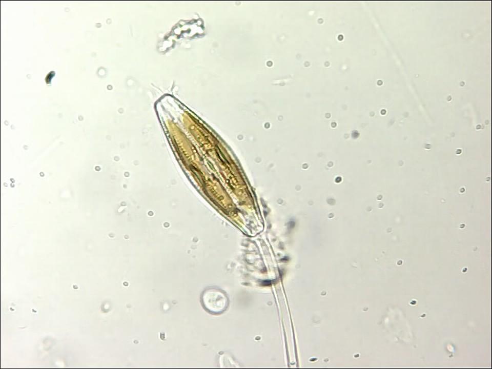 diatome12-2011-10.jpg