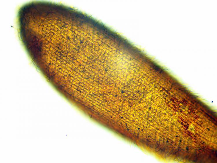 paramecium2-2013-12-12-22-44-25.jpg