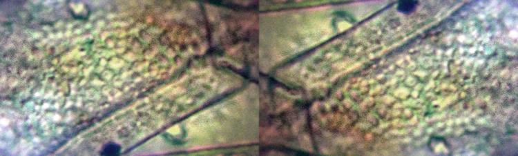 test-trif-skin.jpg