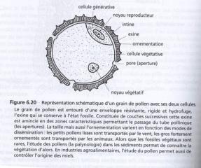pollen_forum.jpg