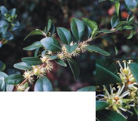forum_pollen_buis1.jpg